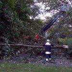 Baum umgestürzt